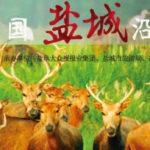 「江蘇悅達杯」2017首屆中國鹽城沿海濕地攝影展徵稿