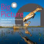 2018 Big Picture Nature Photo Contest