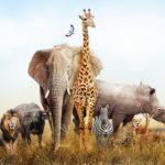 Amazing Wildlife Photo Contest I Our World In Focus