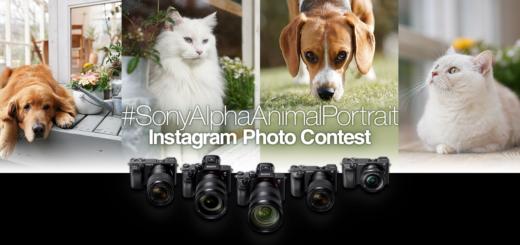Sony Alpha 系列相機 Instagram 動物攝影大賽