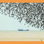 2019「生態河口.百鳥樂園」全國鳥類攝影大展