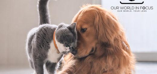Your Favorite Pet Photo Contest