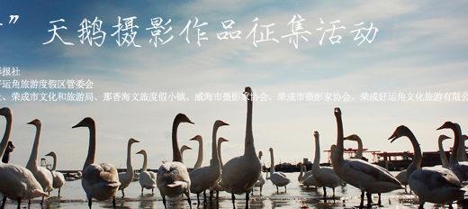 「榮成24小時」天鵝攝影作品徵集