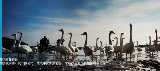 「那香海杯」榮成大天鵝全國攝影大展