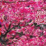 2020九族櫻花祭攝影比賽