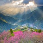 2020「北橫櫻花季」攝影比賽