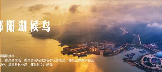 2020第四屆「中國.都昌鄱陽湖候鳥」全國攝影大展