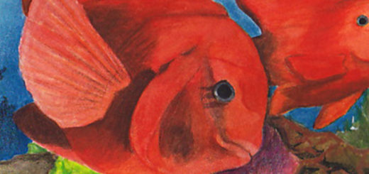 2020 The State-Fish Art Contest and The Fish Migration Award