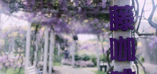 2020年度「紫藤咖啡園」攝影比賽
