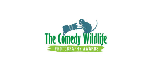 Comedy Wildlife Photo Awards