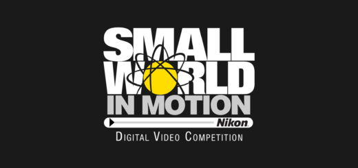 Nikon Small World in Motion Competition