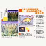 「中元孤棚共普渡.關山海龜觀日落」繪畫比賽