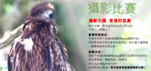 2020第十四屆香港麻鷹節暨第五屆香港猛禽節攝影比賽